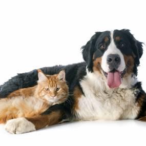 Pet veterinaria 2